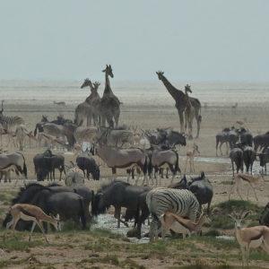Blog_Namibia_Etosha_3