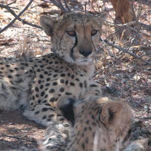 Blog_Namibia_Waterberg_1